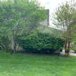 Trees and shrubbery in need of landscaping maintenance