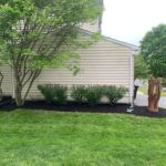 Trees and shrubbery results from expert landscaping